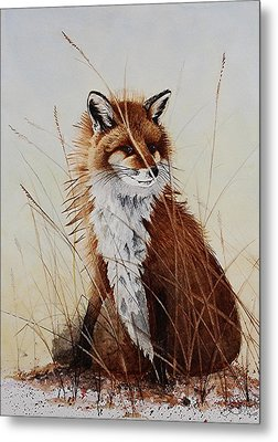 Red Fox Waiting On Breakfast Metal Print by Jimmy Smith