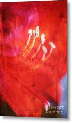Red Intrigue Metal Print by Ella Kaye Dickey