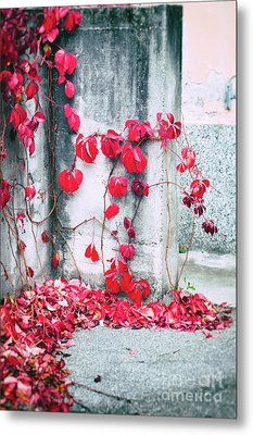 Metal Print featuring the photograph Red Ivy Leaves by Silvia Ganora