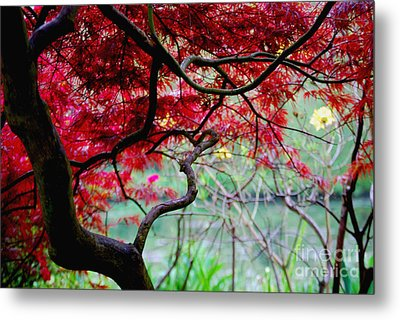 Metal Print featuring the photograph Red Japanese Maple by Nancy Bradley