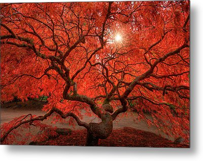 Red Lace Metal Print by Dan Mihai