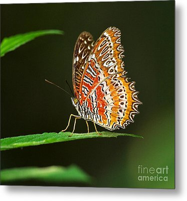 Red Lacewing Butterfly Metal Print by Louise Heusinkveld