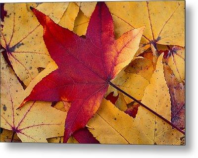 Red Leaf Metal Print by Chevy Fleet