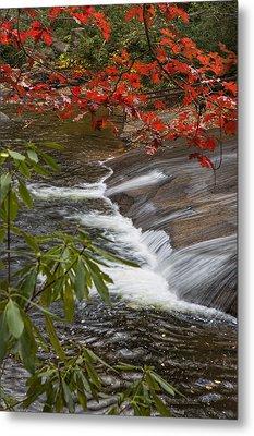 Red Leaf Falls Metal Print