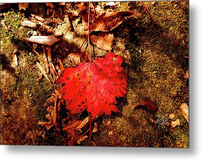 Red Leaf Metal Print by Meta Gatschenberger