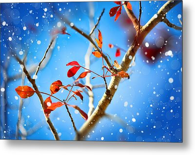Red Leaves On Blue Background Metal Print