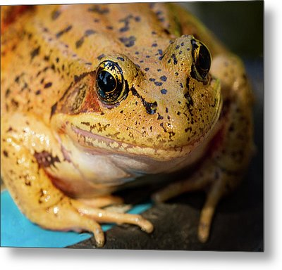 Metal Print featuring the photograph Red Leg Frog by Jean Noren
