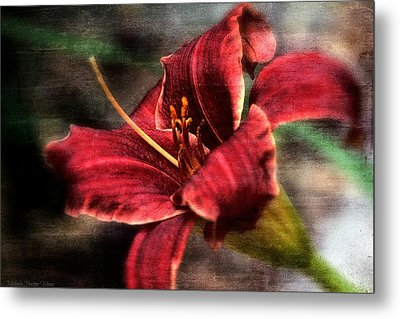 Red Lilly Metal Print