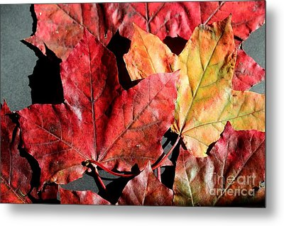 Metal Print featuring the photograph Red Maple Leaves Digital Painting by Barbara Griffin