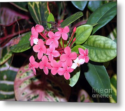 Metal Print featuring the photograph Red Maui Ixora by Terri Mills