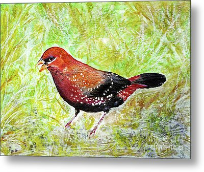 Red Munia Metal Print by Jasna Dragun
