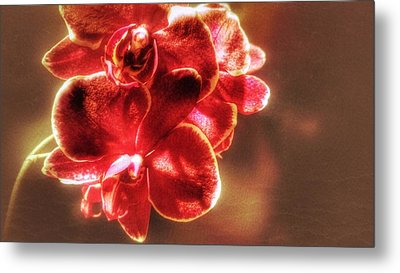 Metal Print featuring the photograph Red Orchid by Isabella F Abbie Shores FRSA