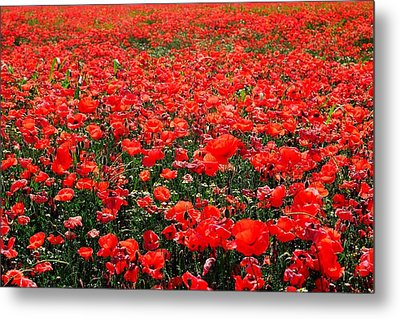 Red Poppies Metal Print by Juergen Weiss