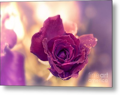 Red Rose Metal Print by Charuhas Images