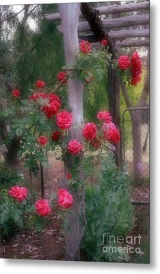 Red Rose Dream Metal Print