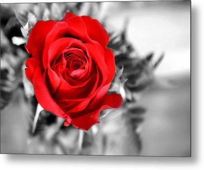 Red Rose Metal Print by Karen M Scovill