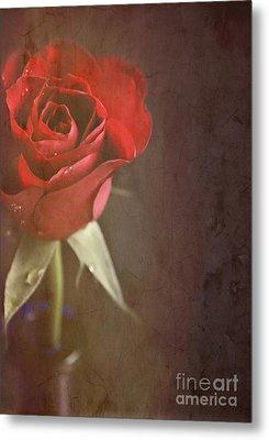 Red Rose Metal Print by Lyn Randle