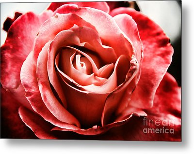 Metal Print featuring the photograph Red Rose  by Mariola Bitner