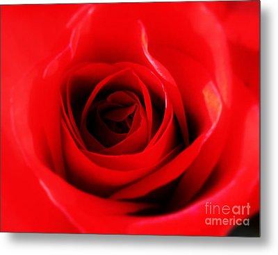 Red Rose Metal Print by Nina Ficur Feenan