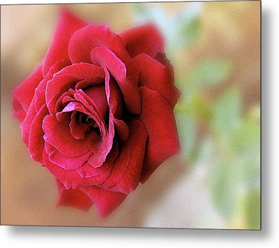 Red Rose Of Love 3651_2 Metal Print by S Art