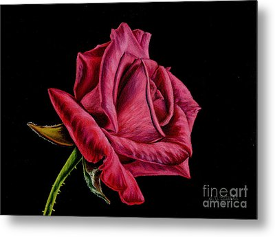 Red Rose On Black Metal Print by Sarah Batalka