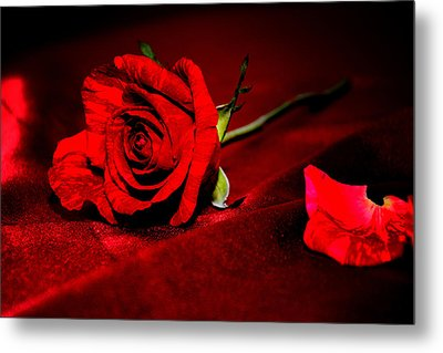 Red Rose  Metal Print by Serena King
