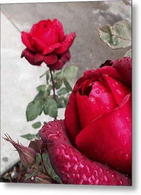 Red Roses Metal Print by Beverly Johnson