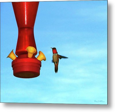 Metal Print featuring the photograph Red Ruby by Wendy McKennon