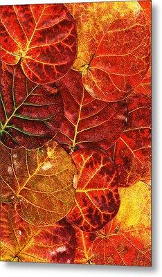 Red Sea Grapes By Sharon Cummings Metal Print by Sharon Cummings