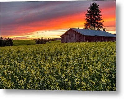 Red Sky Over Canola Metal Print