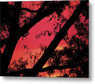 Metal Print featuring the photograph Red Sky by Susan Carella