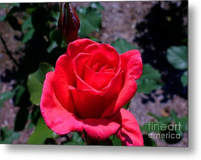 Metal Print featuring the photograph Red Splendor by David Bishop