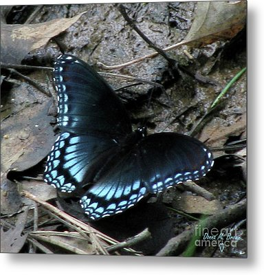 Metal Print featuring the photograph Red Spotted Purple Swallowtail Butterfly by Donna Brown