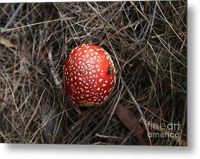 Red Spotty Toadstool Metal Print