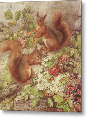 Red Squirrels Gathering Fruits And Nuts Metal Print by Rosa Jameson