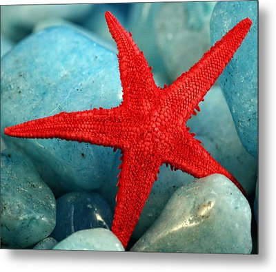 Red Starfish Metal Print by Gina Cormier