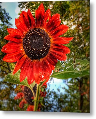 Metal Print featuring the photograph Red Sun by Jame Hayes