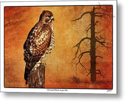 Red-tailed Hawk Escape Plan Metal Print