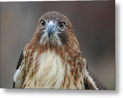 Metal Print featuring the photograph Red Tailed Hawk by Richard Bryce and Family