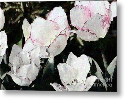 Red-tipped Tulips Metal Print by Sharon Johnston