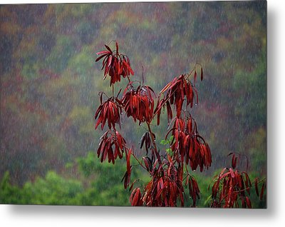 Red Tree In The Rain Metal Print by Michael Thomas