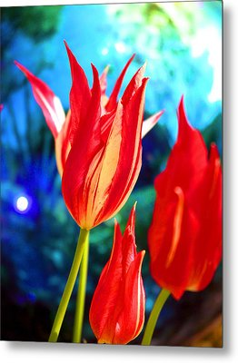 Red Tulip With Blue Ball Metal Print