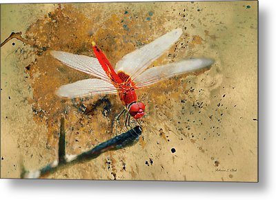 Metal Print featuring the photograph Red Veined Darter Dragonfly by Bellesouth Studio