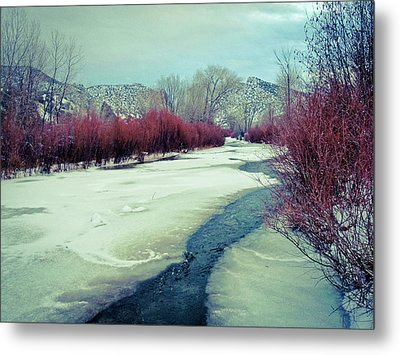 Red Willows On The Embudo Metal Print
