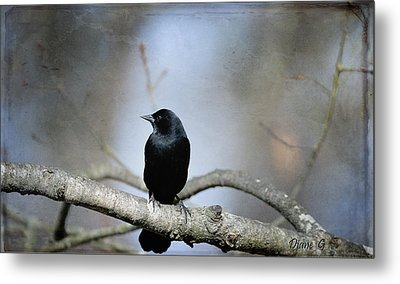 Red-winged Blackbird Metal Print by Diane Giurco