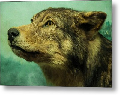 Metal Print featuring the digital art Red Wolf Digital Art by Chris Flees