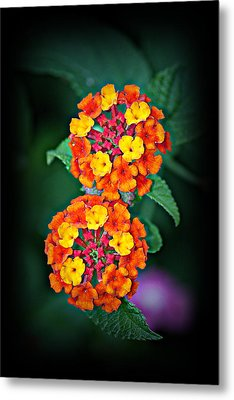 Metal Print featuring the photograph Red Yellow And Orange Lantana by KayeCee Spain