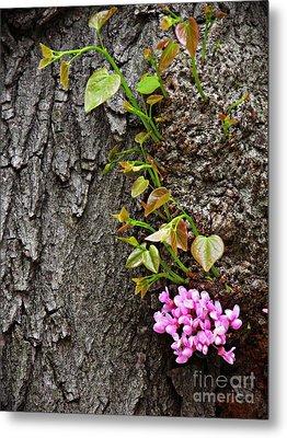 Redbud Flowers 2 Metal Print by Sarah Loft