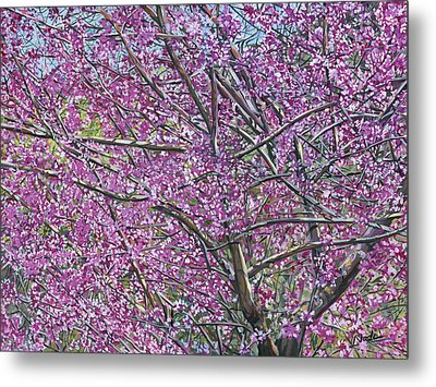 Redbud Tree Metal Print by Nadi Spencer