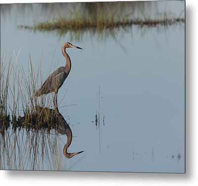 Reddish Egret And Reflection In The Morning Light Metal Print